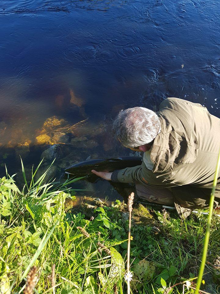 Un saumon est remis à l'eau sur le parcours de pêche de Ballyduff Bridge Fishery #CPRsavesfish