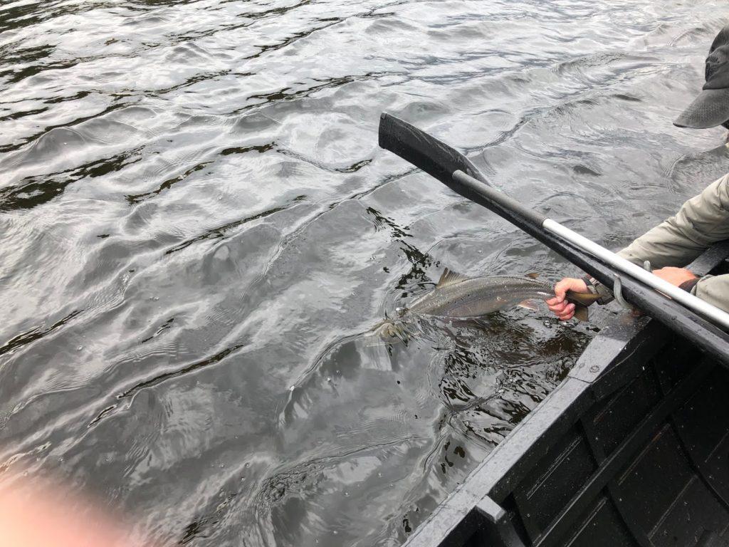 Juge David Burton et le premier saumon capturé et relâché du Lough Currane en 2019 - cet événement rare remporte la Prise de la Semaine.