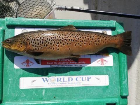 La truite gagnante de Tony Grehan de 1.8 kg