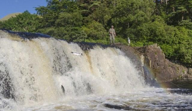 La remontée de saumon sur la rivière Erriff