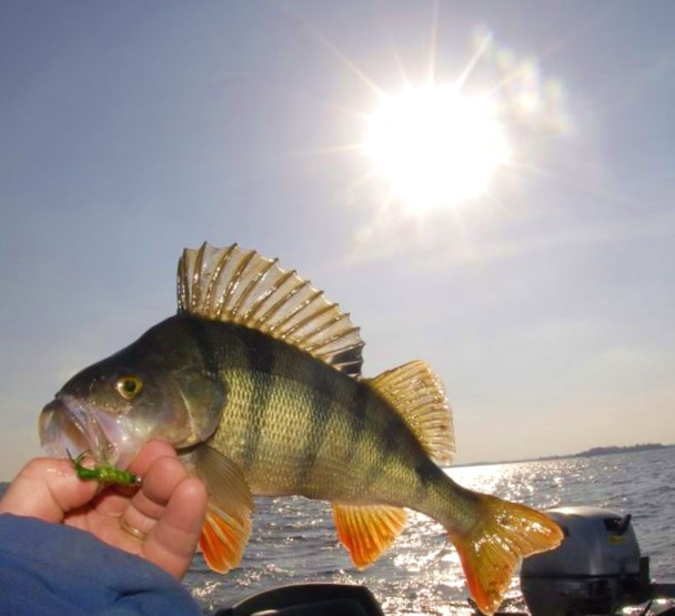 Pêche a foison sur le Lough Ennell