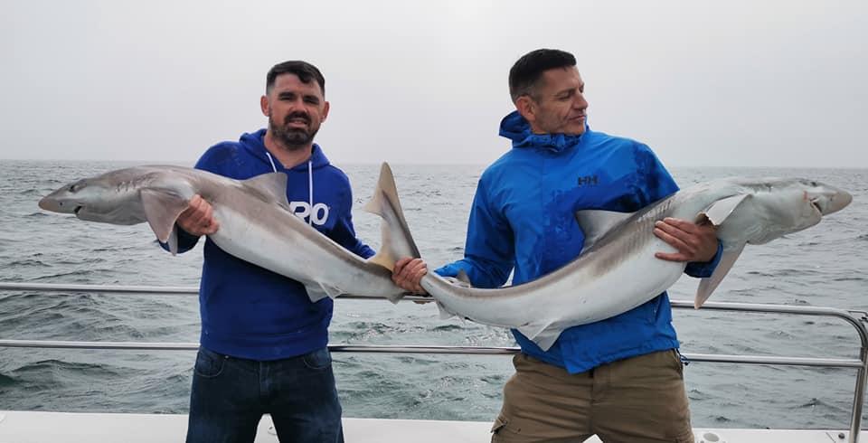Les beaux poissons Irlandais de la côte de Wicklow