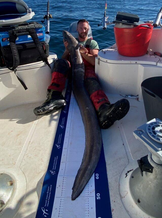 La pêche en mer en Irlande, Congre de 18 kg