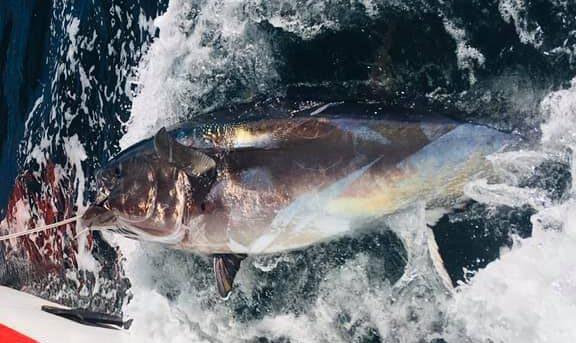 La pêche de thon rouge en Irlande