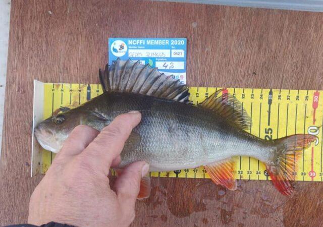 La pêche des carnassiers en Irlande