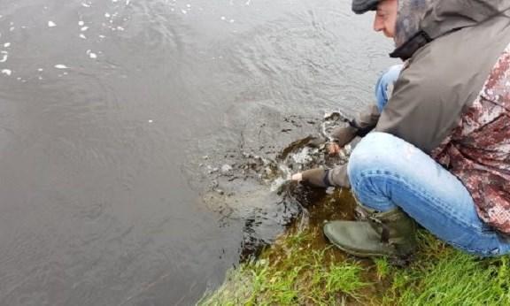 Stephen remis à l'eau un saumon sur la rivière Feale, Irlande