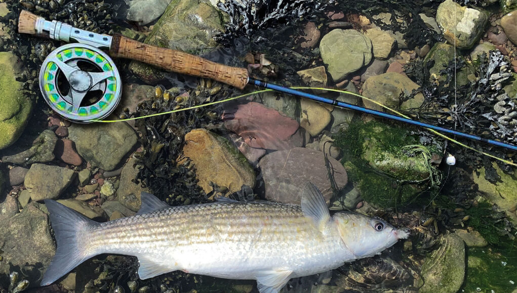 La pêche en eau salée à la mouche en Irlande