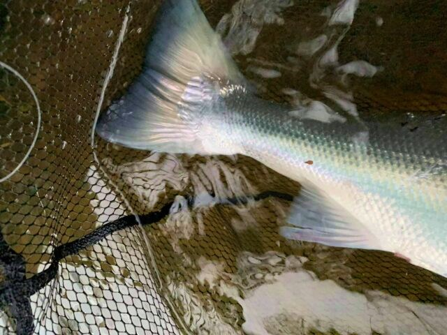 La pêche du saumon en Irlande