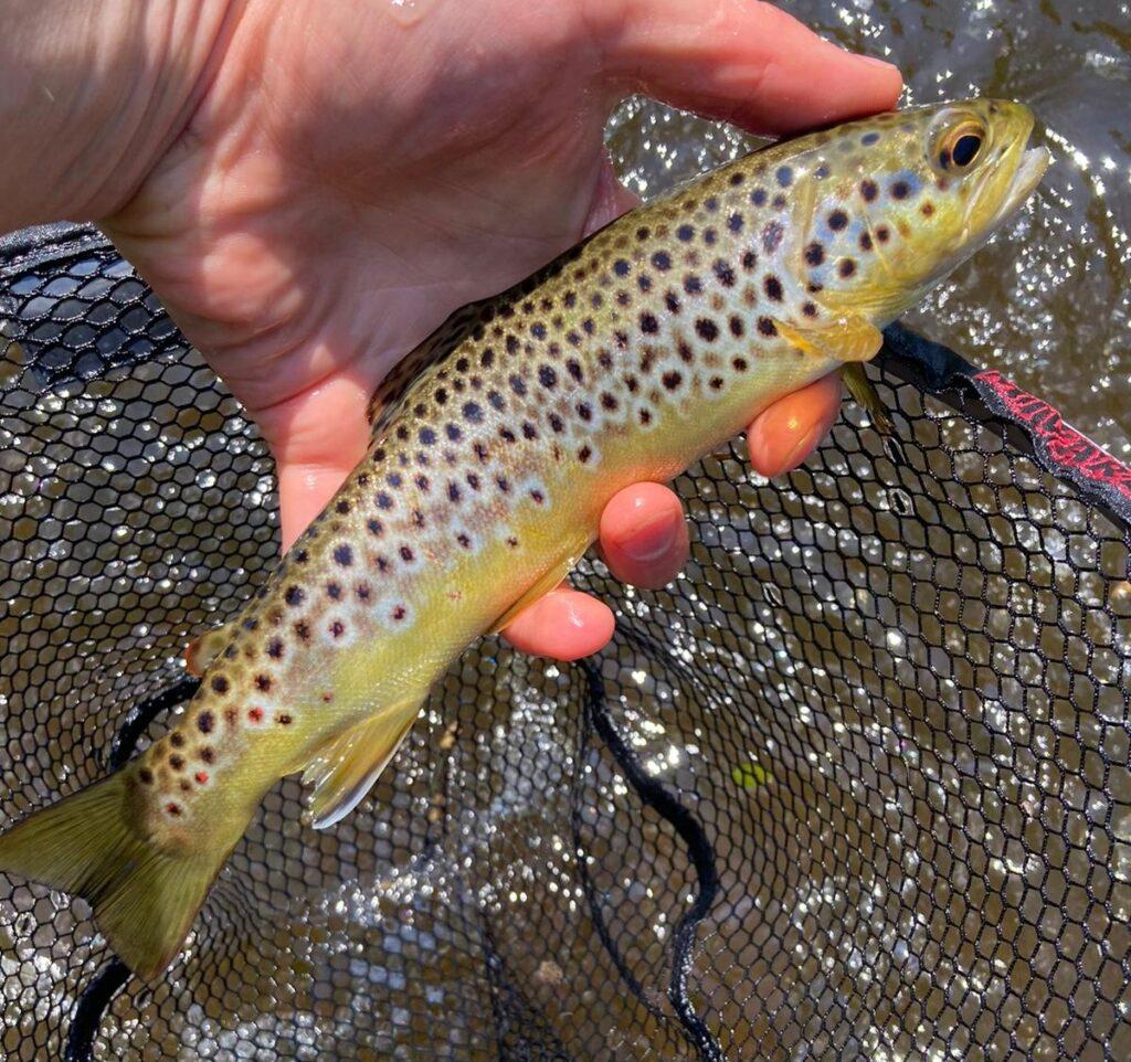 La pêche de la truite sur la rivière Nore a Mount Juliet