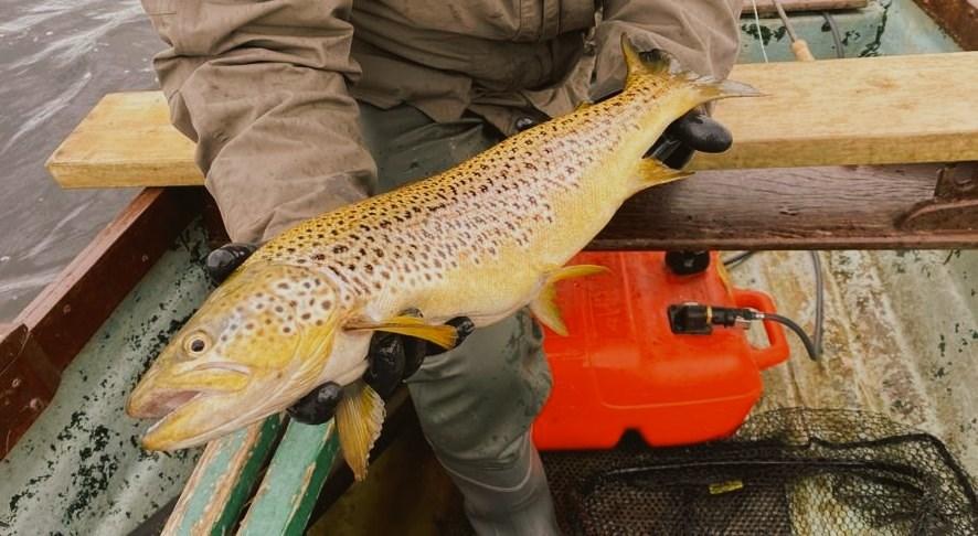 La pêche de la truite dans les Midlands de l'Irlande