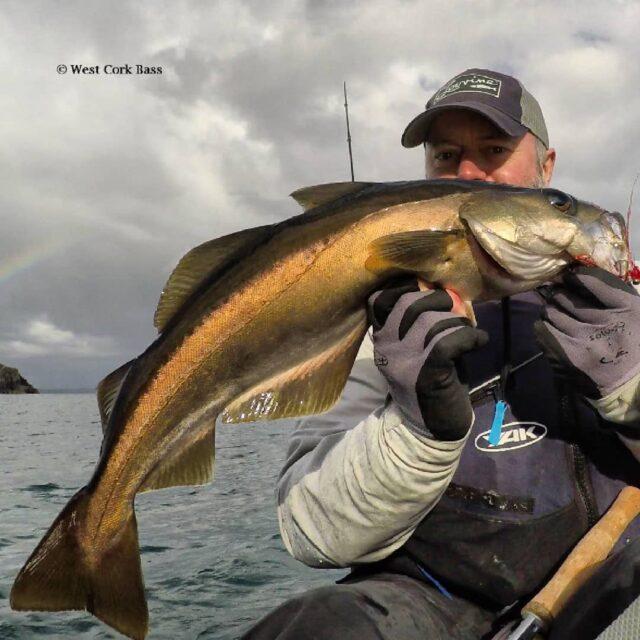 La pêche en Irlande, un beau lieu jaune pêché en kayak