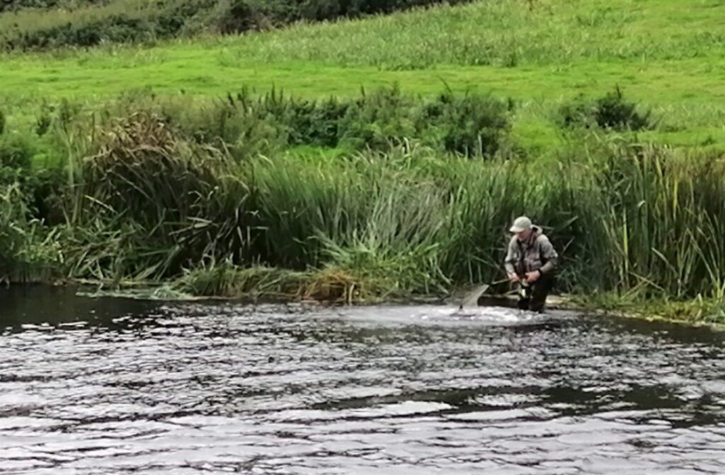 Un saumon dans l'épuisette, pêche en Irlande